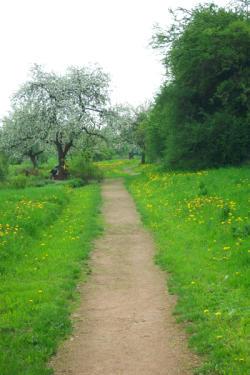 Pfad im Klostergarten